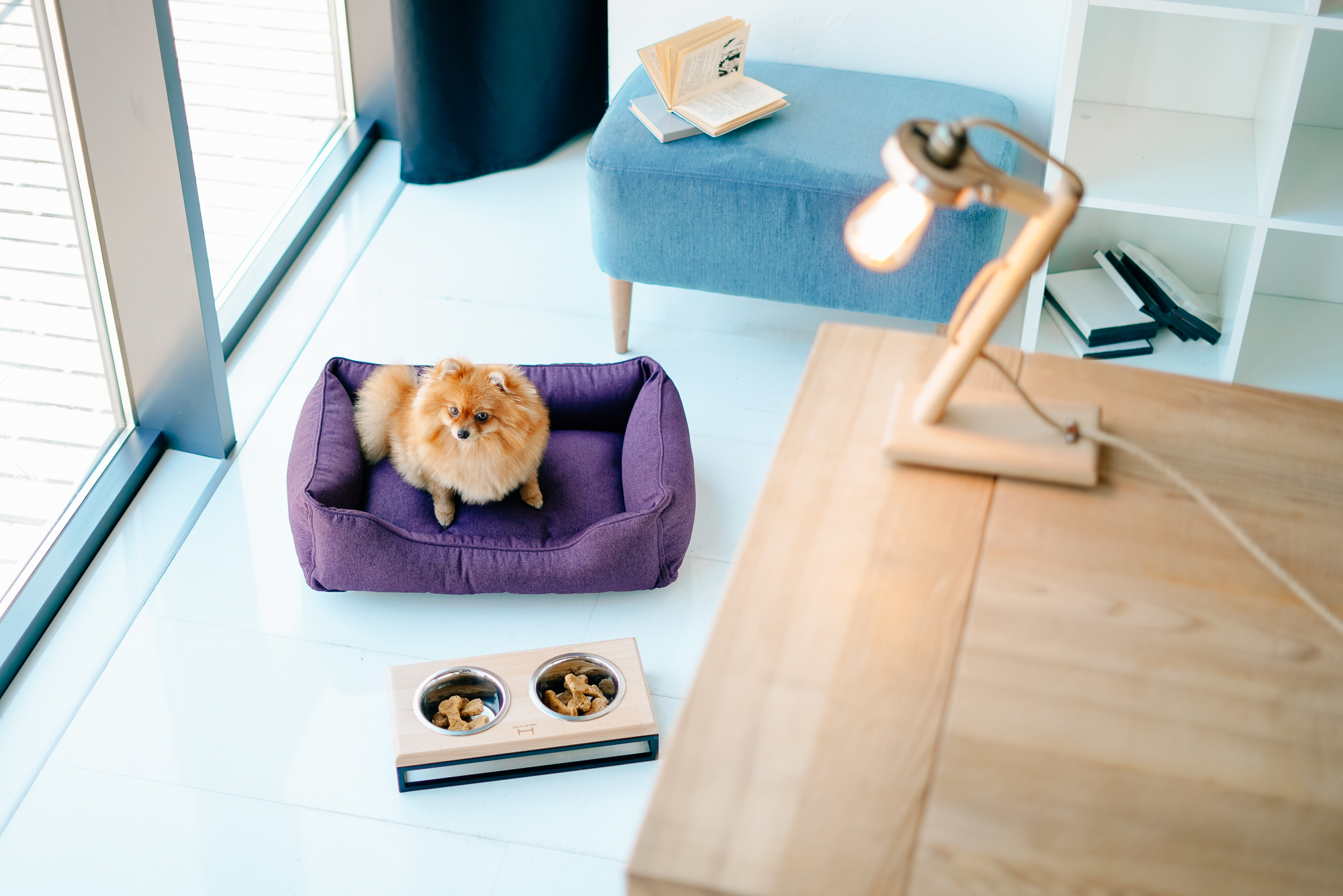 designer furniture and stylish accessories for pets